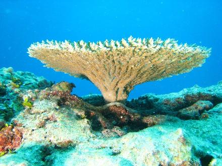 Cancun - Belize Barrier Riff