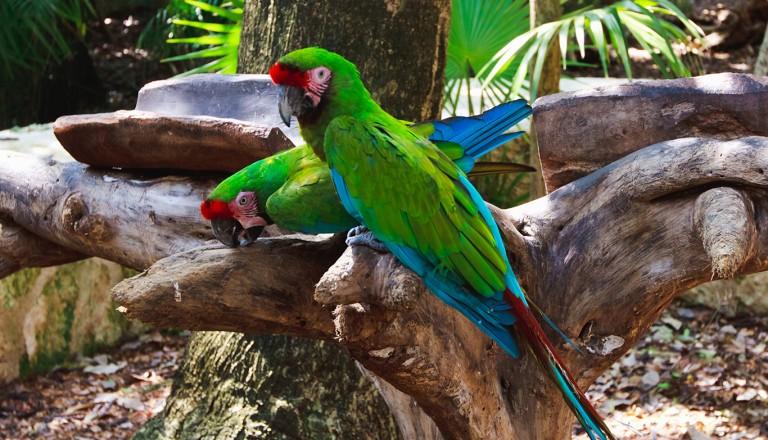 Cancun-Naturpark-Tres-Ríos.