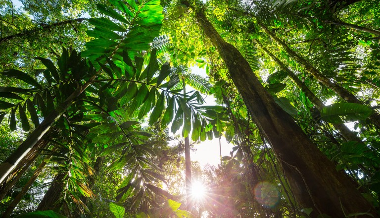 Costa-Rica-Nationalpark-La-Amistad