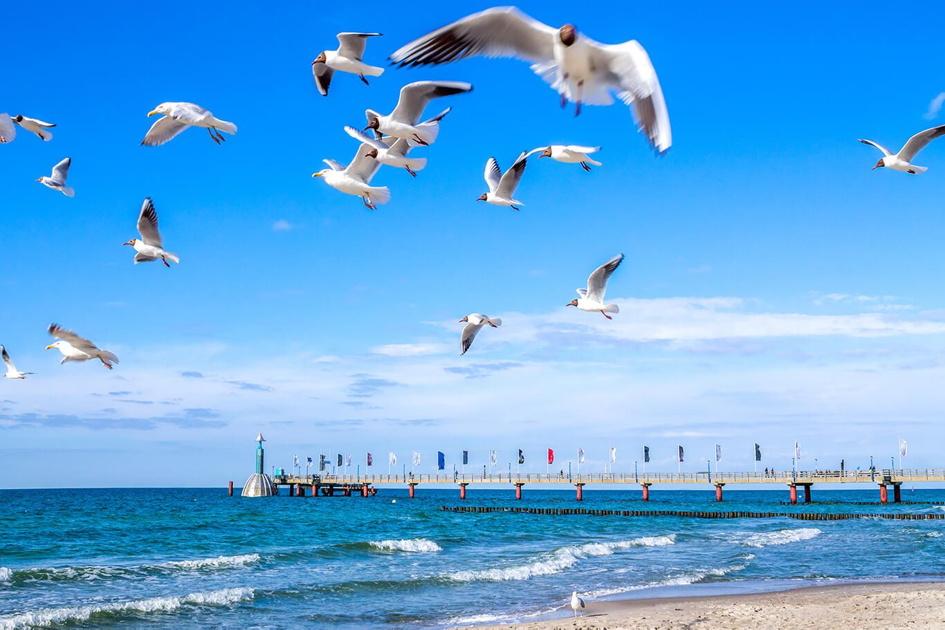 Fl ge an die ostsee g nstig buchen flug preisvergleich for Ostsee urlaub billig