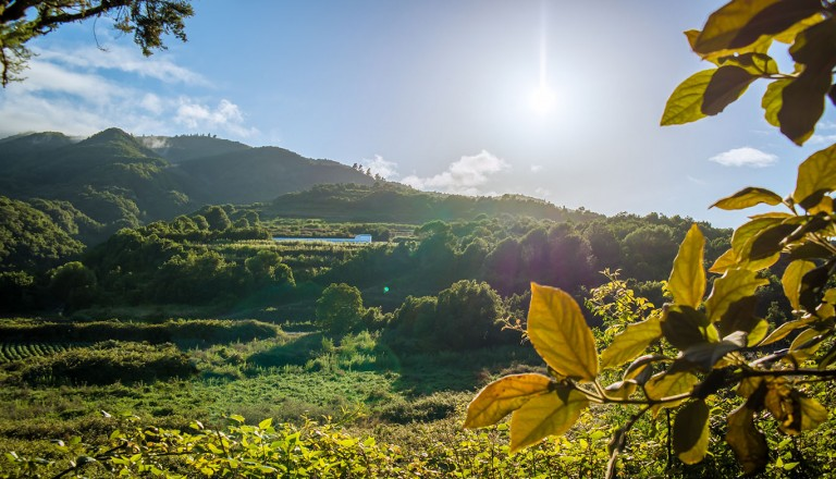 La Palma - Barlovento-Laguna