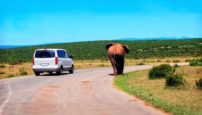 Mietwagen - Suedafrika