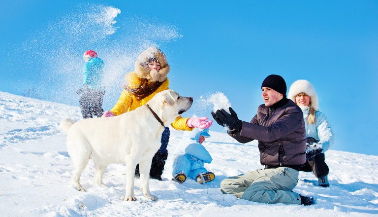 Winterurlaub - Hund